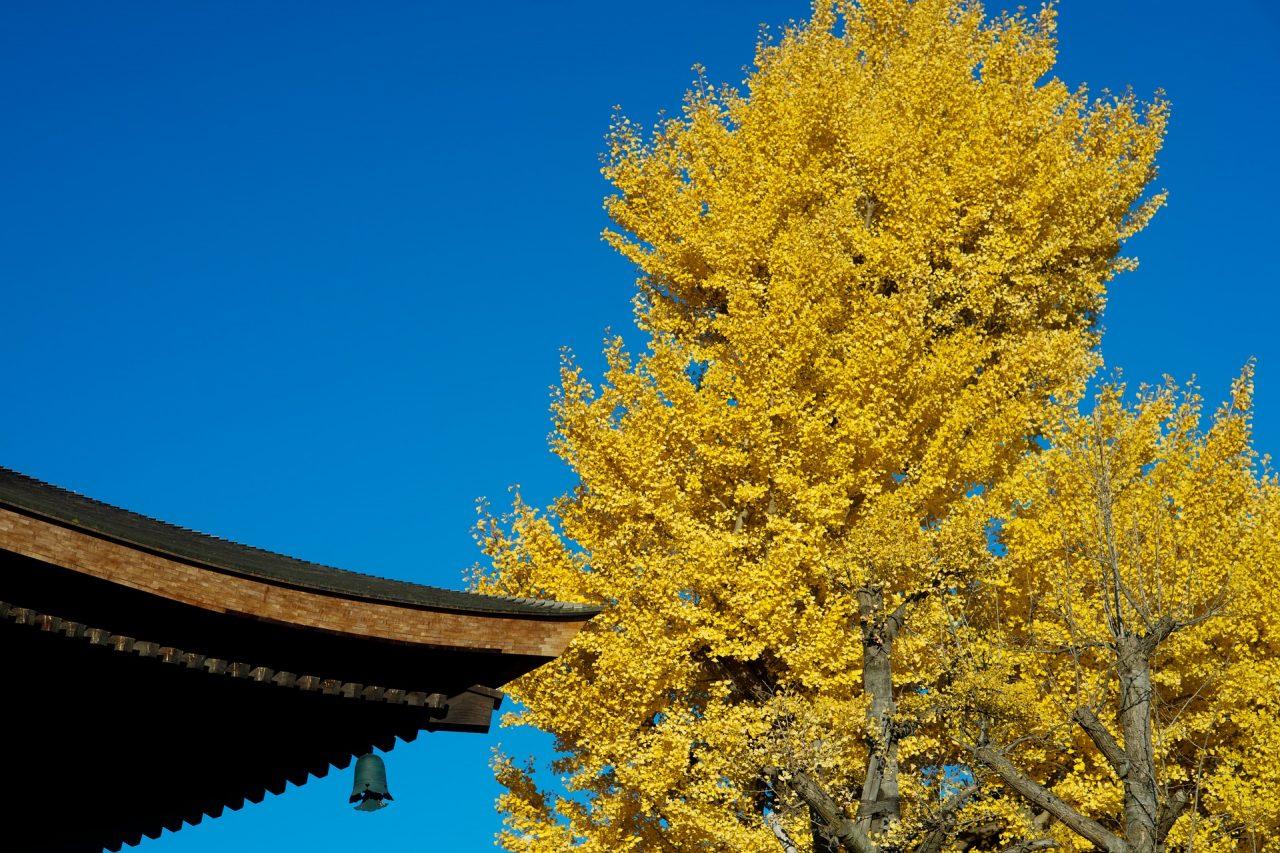 autumnal-leaves-3806128_1920