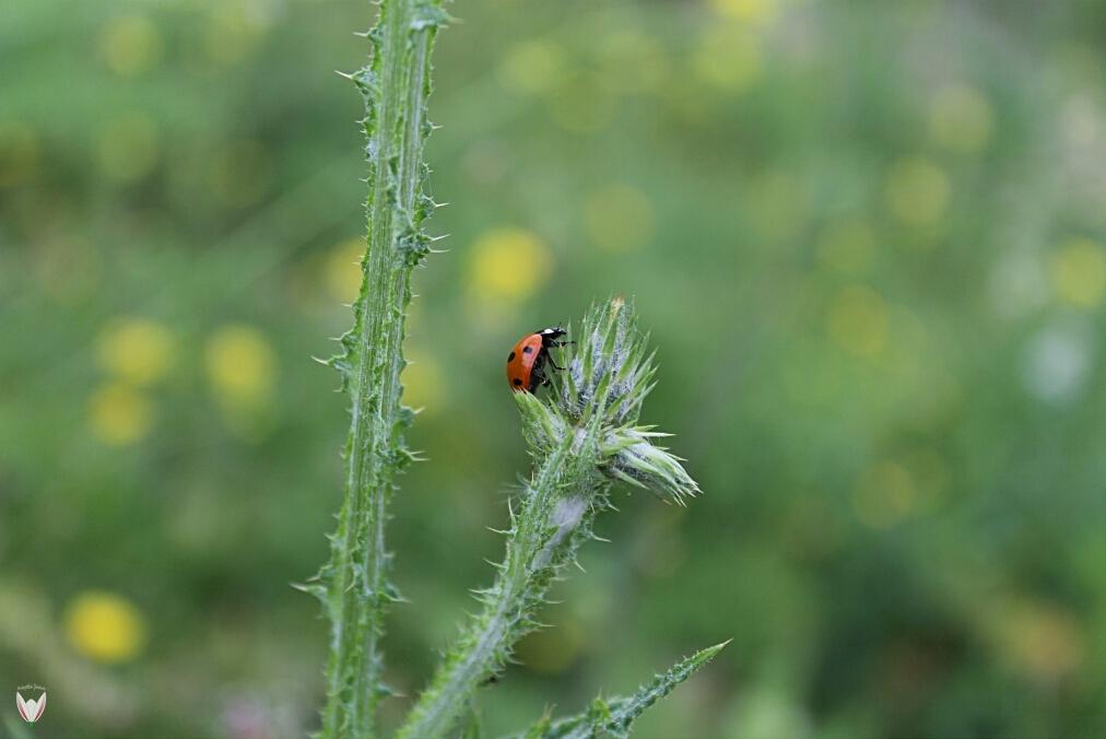 Bitkiler-Kendilerini-Savunabilir-Mi.jpg